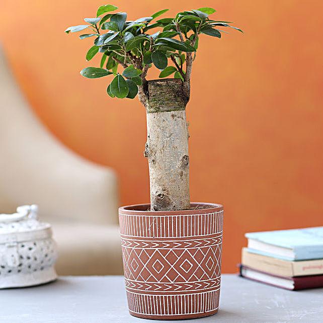 Ficus Trunk Plant In Beautiful Tribal Print Pot