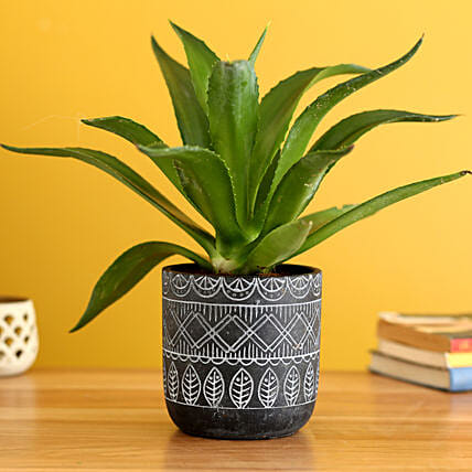 Lotus Cactus Plant In Abstract Print Pot