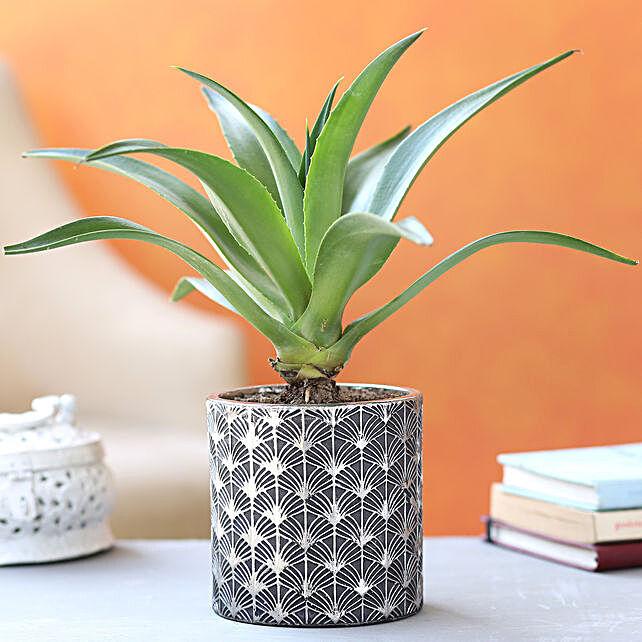 Lotus Cactus Plant In Beautiful Ceramic Pot:Egyptian Art-planters