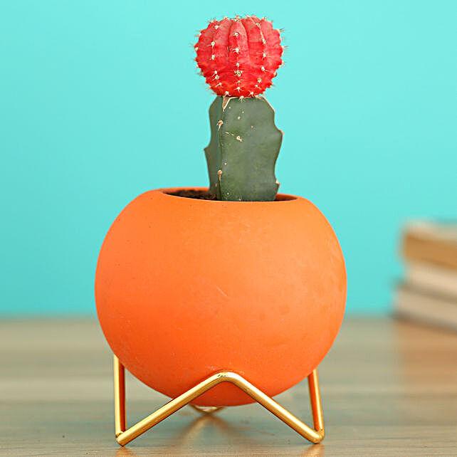 Moon Cactus Plant In Orange Round Planter:Planter Stands