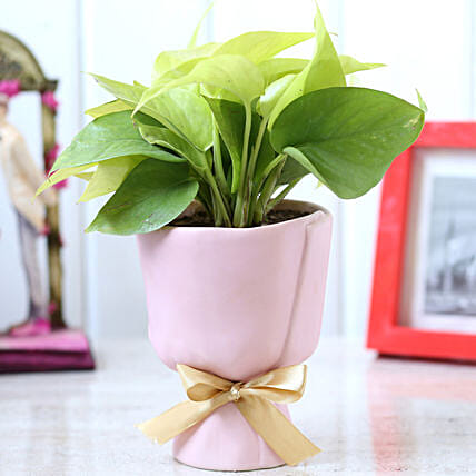 Money Plant In Glass Planter With Bow