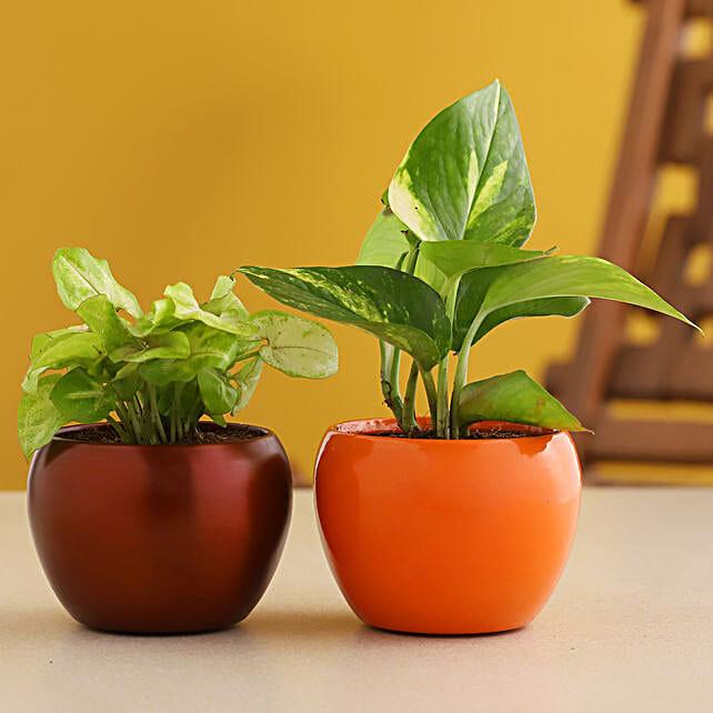 Syngonium N Money Plant Combo In Metal Pot