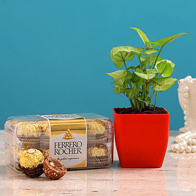 Syngonium Plant And Ferrero Rocher Combo