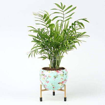 Chamaedorea Plant In Floral Design Metal Pot Hand Delivery