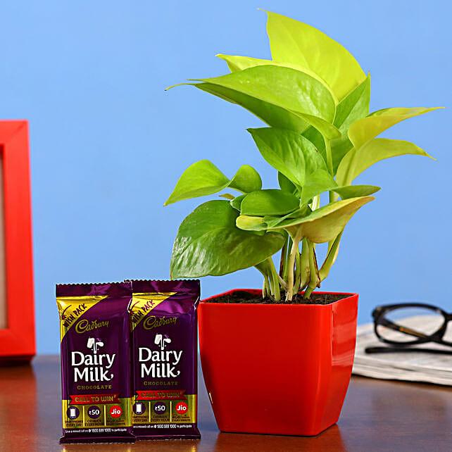 Money Plant And Dairy Milk Bars:Buy Cadbury Chocolates