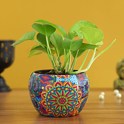 Money Plant In Colourfull Rajwada Printed Pot Hand Delivery