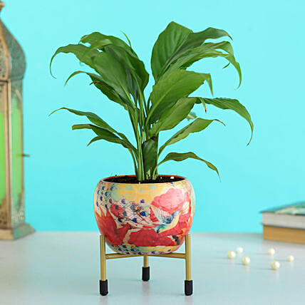 Peace Lily Plant In Floral Printed Metal Pot Hand Delivery