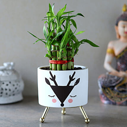 2 Layer Bamboo Plant In White Black Reindeer Pot