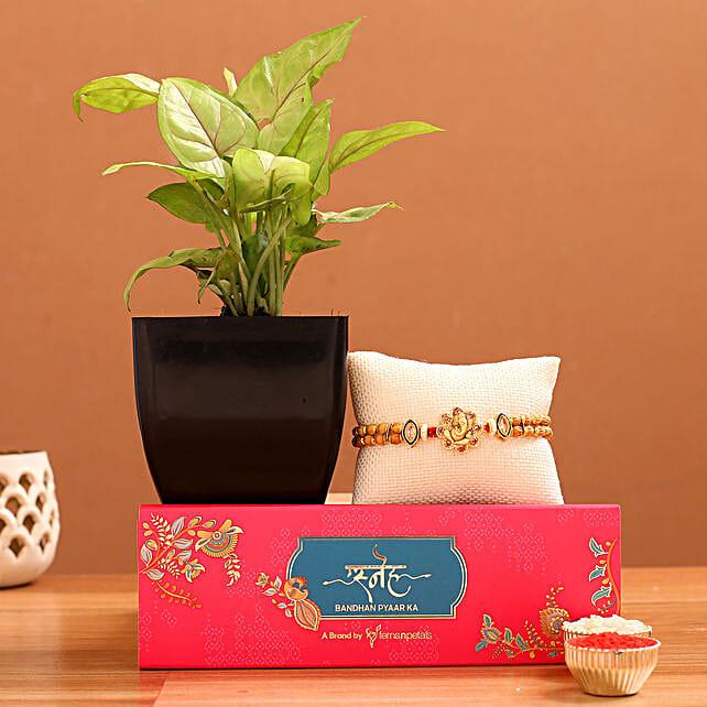 Ganesha Rakhi And Syngonium Plant Hamper