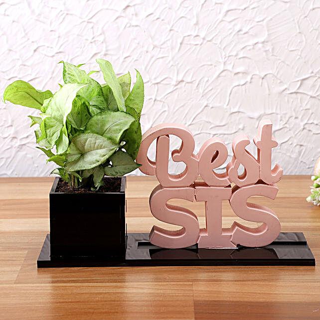 Syngonium Plant In Best Sis Planter