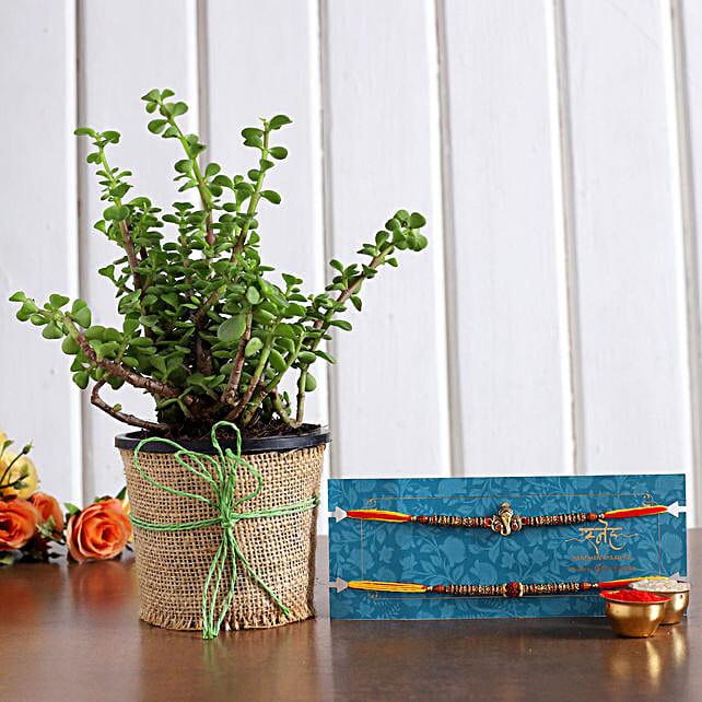 Set of 2 Holy Rakhi N Jade Plant