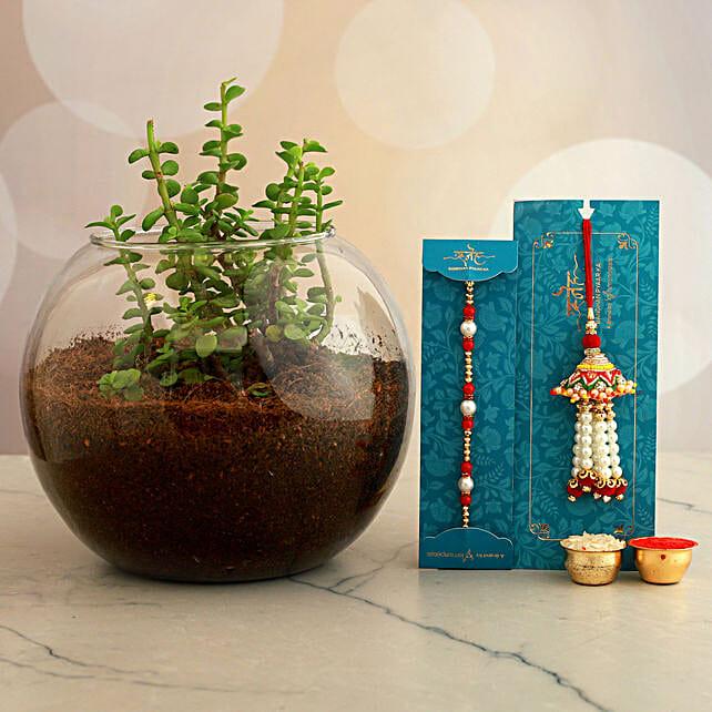 Pearl Lumba And Rakhi Set With Jade Plant In Round Vase