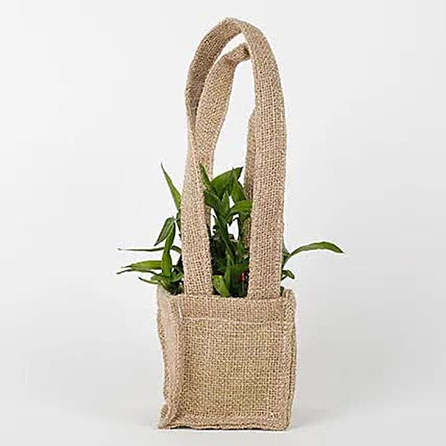 2 Layer Lucky Bamboo Plant Online:Send Plants to Bhubaneshwar