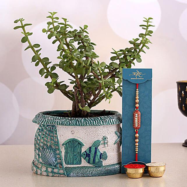 Designer Rakhi And Jade Plant House Pot