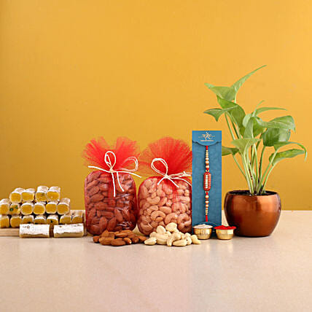 Designer Rakhi And Money Plant Pot With Sweet Treats