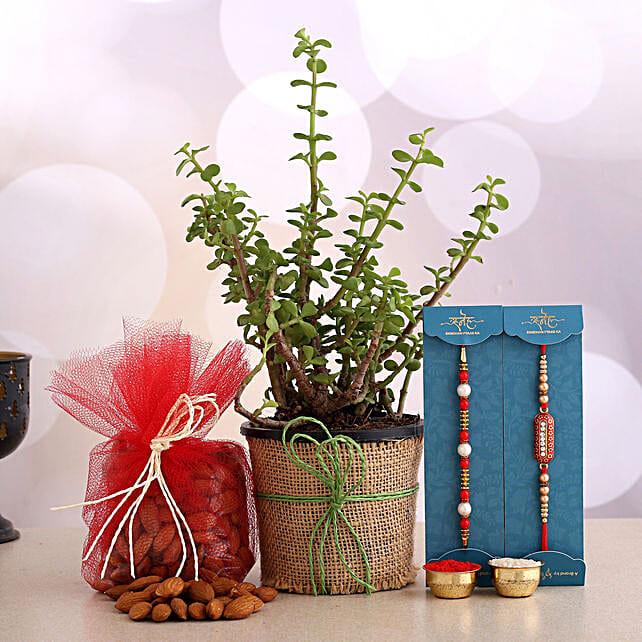 Set of 2 Designer Rakhi And Jade Plant With Almonds