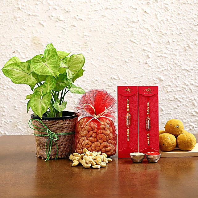 Set of 2 Rakhi And Syngonium Plant With Sweet Treats