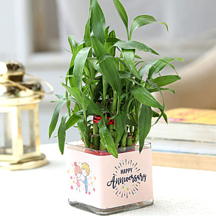 Two Layer Bamboo Plant Anniversary Greetings Hand Delivery:Lucky Bamboo Plants