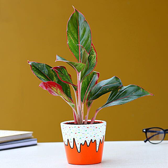 Aglaonema Plant In Orange Ice Cream Cone Pot:Hand Painted planters