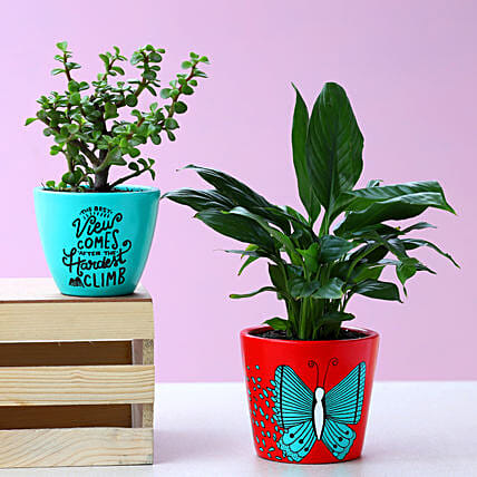 Jade and Peace Lily Plant In Lovely Hand Painted Pots
