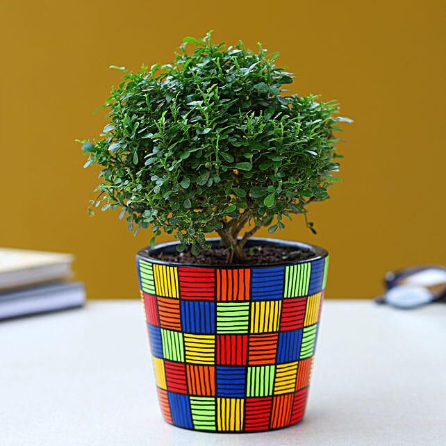 Table Kamini Plant In Multicoloured Handpainted Pot