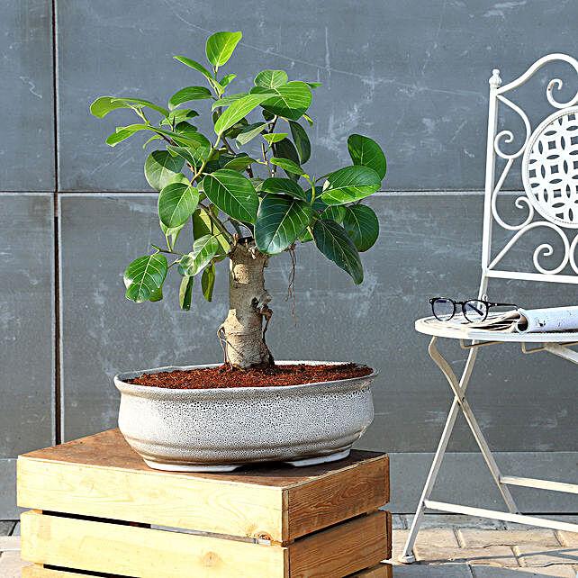 Bud Bonsai Plant In White Tray Planter