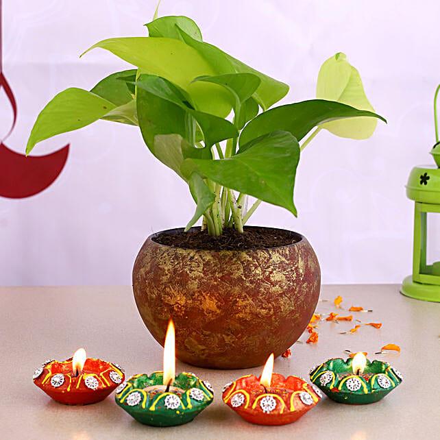 Money Plant Golden Pot & Designer Diyas