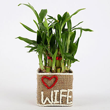 Bamboo Pot Plant For Wife