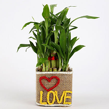 Valentine Pot Plant for Her