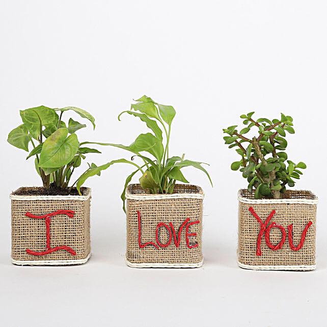 I Love You Pot with Plant Online:Premium Plants