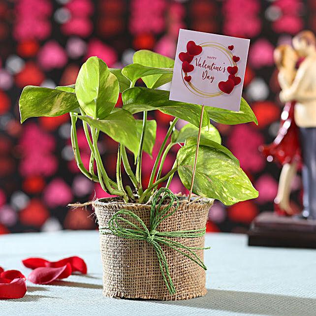 Online Valentine's Wishes Jade Plant