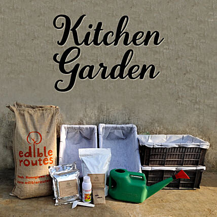 Vegetable Kitchen Garden Crates:Send Organic Seeds