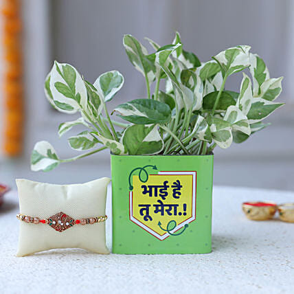 Rakhi with Plant Online For Bro
