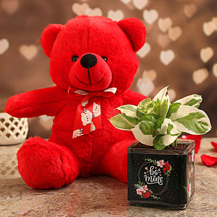 White Pothos Plant In Be Mine Vase & Red Teddy:Send Soft toys to Kanpur