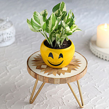 White Pothos Plant In Cute Smiley Pot With Beautiful Stand