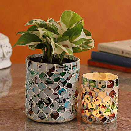 White Pothos Plant In Distressed Mosaic Vase And Votive