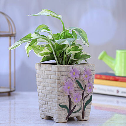 White Pothos Plant In Flower Embossed Pot