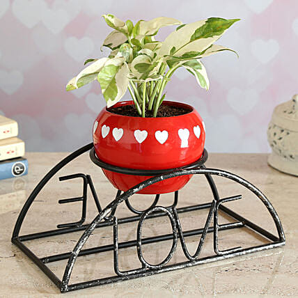 White Pothos Plant In Love Pot With Stand