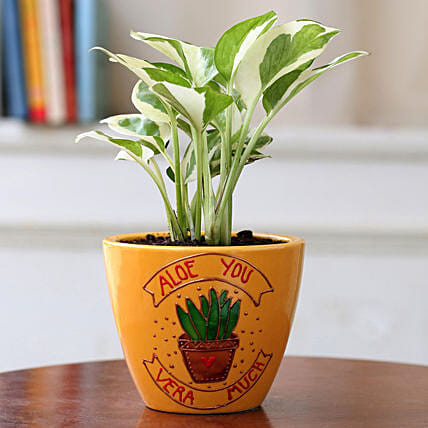 White Pothos Plant in Yellow Ceramic Planter