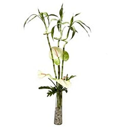 Winter Wonderland - Arrangement of 3 Anthuriums 3 stems of dancing bamboo in a thin long glass vase with pebbles