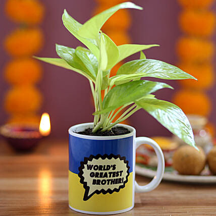 Money Plant with Mug for Brother