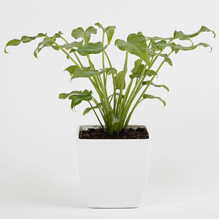 outdoor green plant online