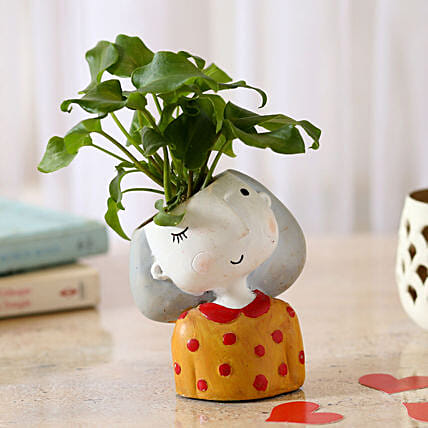 indoor plant for valentine day