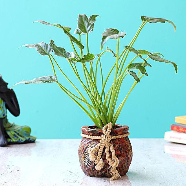 xanadu plant in unique shape pot