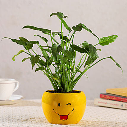 Xanadu Plant In Emoji Printed Pot