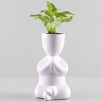 Plant in Ceramic Planter:Fiber Planters