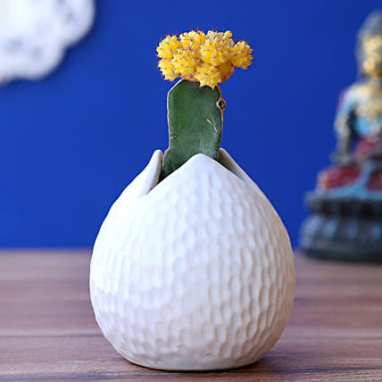 Yellow Moon Cactus Plant In Drop Shaped Pot