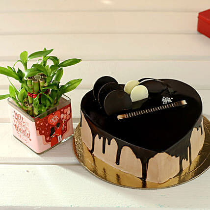 Chocolate Cake & Plant Combo for Wife:Lucky Bamboo for Anniversary