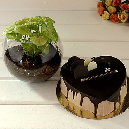 Yummy Cake & Plant Gift for Her