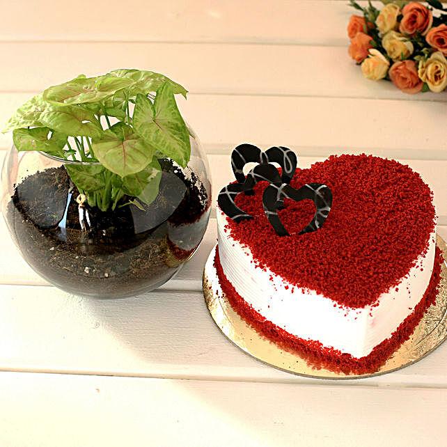 Red Velvet Cake & Money Plant Combo